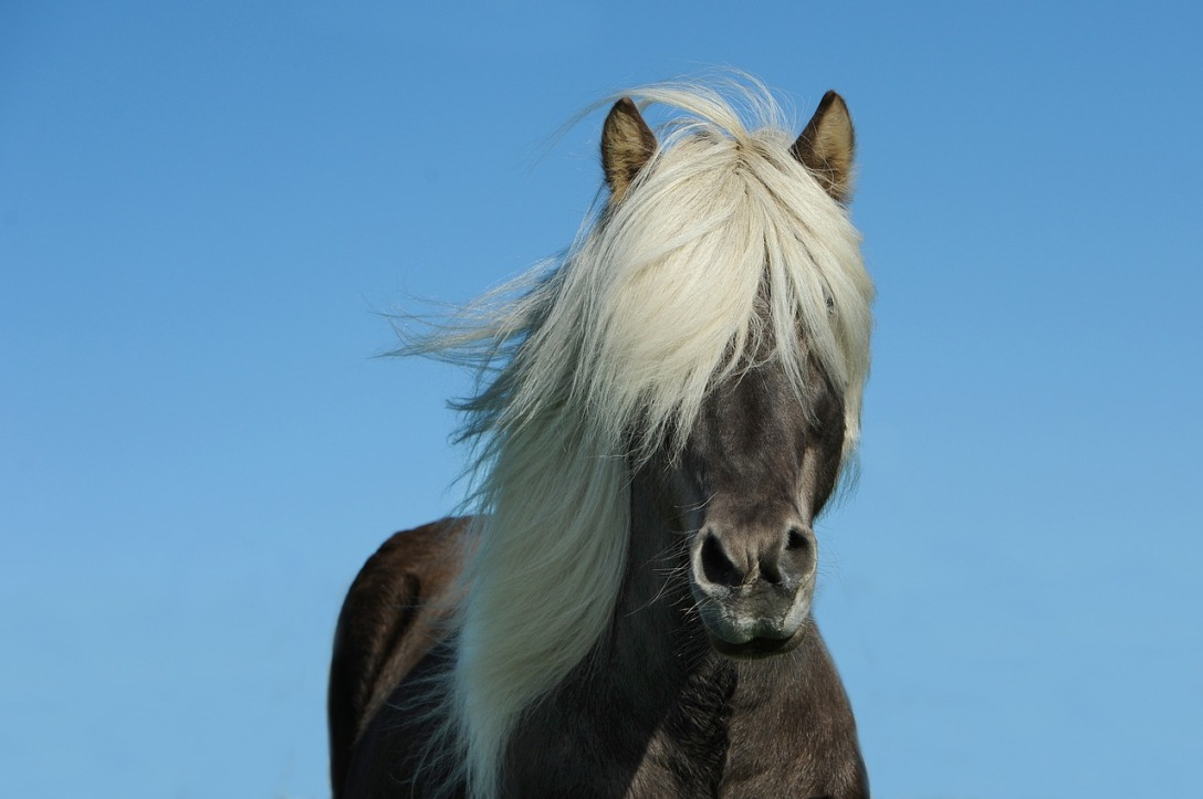 horse-1330690_1280.jpg